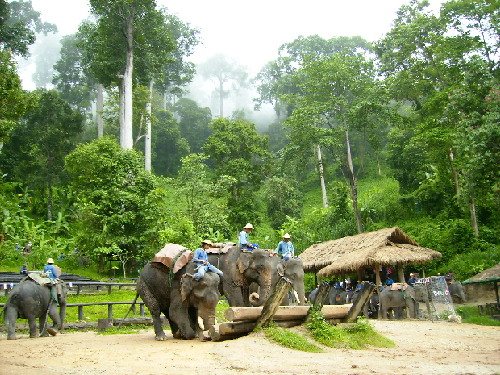 Maesa Elephant Camp in the lush green monsoon forest