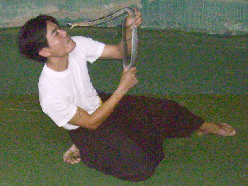 A snake-performer dicing with death