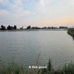 A man-made fish pond near Xinghua Bay