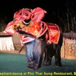 An elephant dance