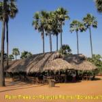 A palm farm