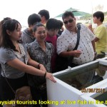 Malaysian tourists looking at live seafish