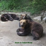 Black bears in Safari World