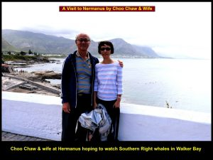 Choo Chaw & wife together with fellow-Malaysians visiting Hermanus to watch whales in Walker Bay