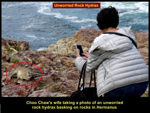 Choo Chaw's wife taking photo of a rock hydrax
