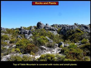 Sparse vegetation growing among the sandstone rocks