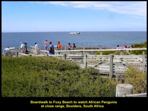 A boardwalk to Foxy Beach where penguins live