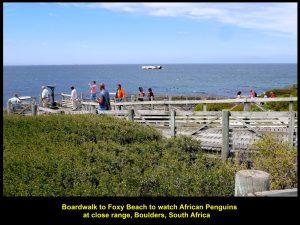 A boardwalk to Foxy Beach where penguins live