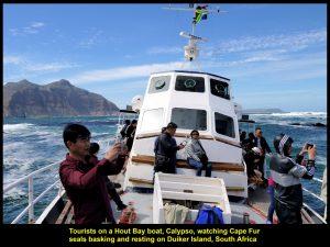 Tourists watching seals on Duiker Island
