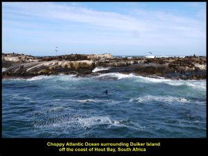 Duiker Island, a dirty-looking island full of African Fur Seals
