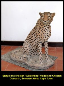 Statue of a Cheetah at the entrance of Cheetah Outreach welcoming visitors