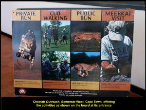 Cheetah Outreach's activities for visitors