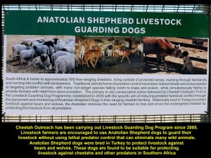 Farmers are encouraged to use dogs to guard their livestock against predators