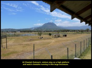 Visitors can watch cheetahs running in this large fenced-up field from a high platform.