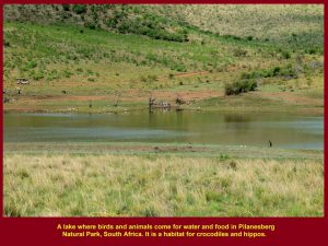 That large lake attracted many birds and animals that went for a drink. Two hippos were seen in the water.