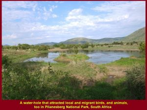 A water-hole that attracted local and migrant birds, and animals, too