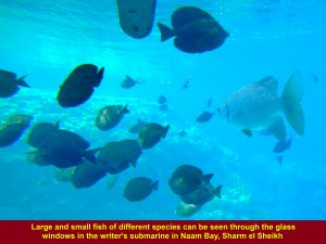 Large and small fish of diverse kinds in Naama Bay, Sharm el Sheikh