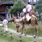 A camel ride