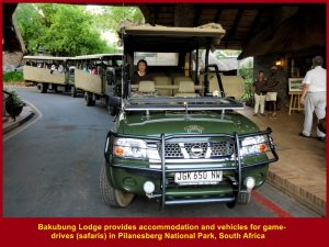 Bakubung Lodge provides accommodation and game-drives(safaris)